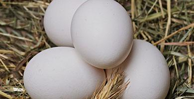 limpieza energética con un huevo